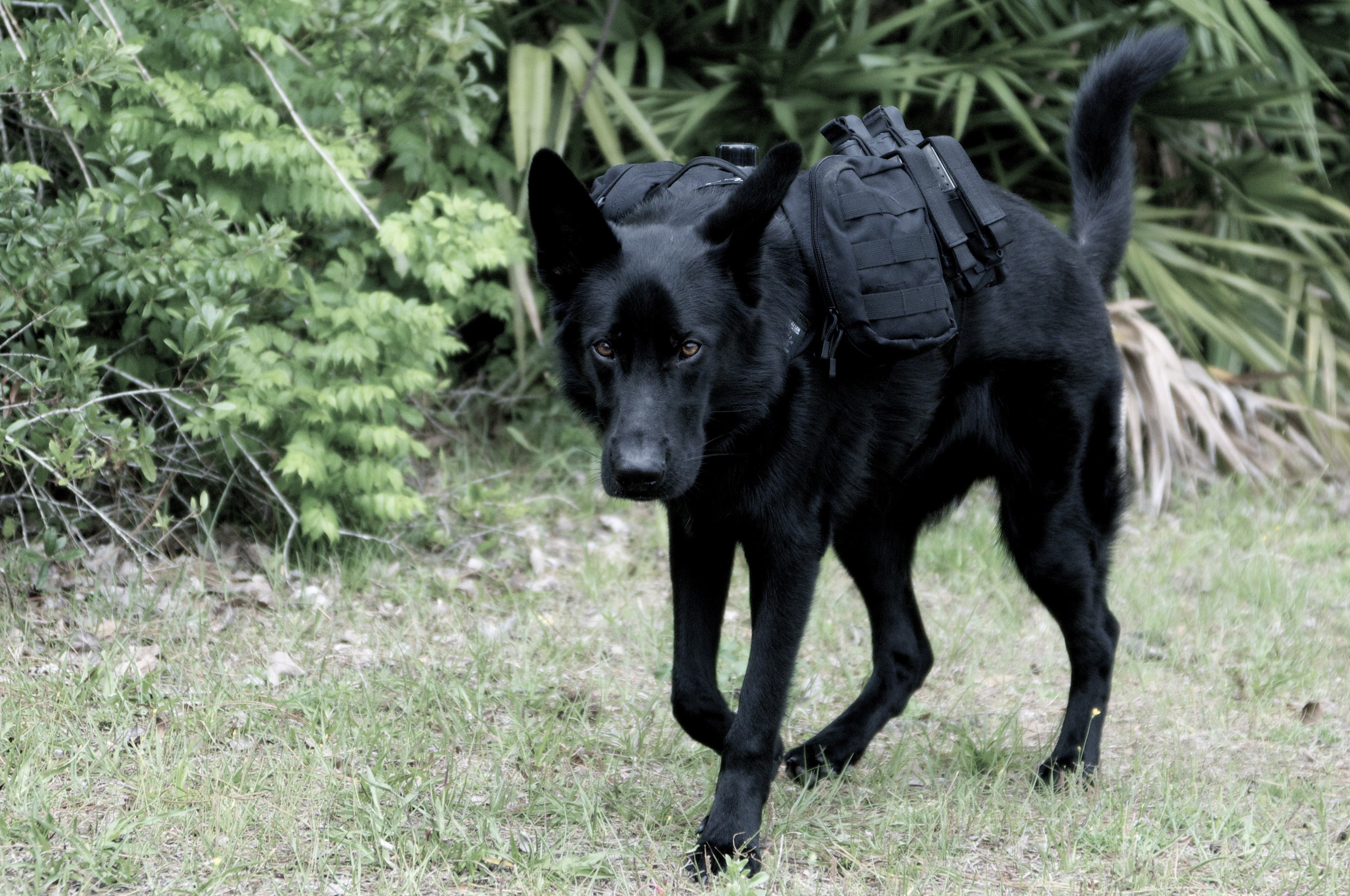 German Shepherd Backpack - Prepper Style
