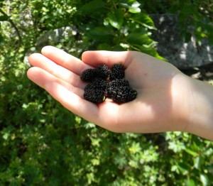 Children adore mulberries.