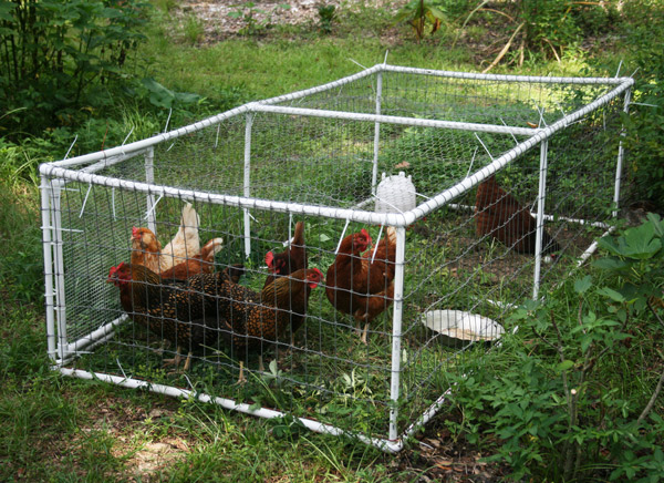 Put your chickens to work with a simple chicken tractor for Pvc chicken tractor plans