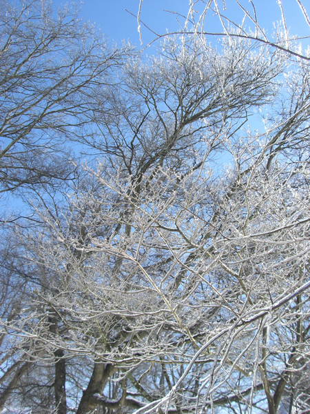 Trees natural frost protection - Protecting fruit trees in winter ...