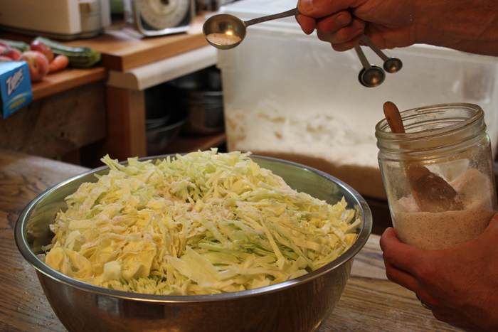 After cabbage is shredded, a salt brine creates the right conditions for lacto-fermentation.
