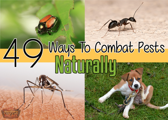 How To Combat Pesky Bugs Naturally!