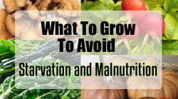 What To Grow To Avoid Starvation and Malnutrition