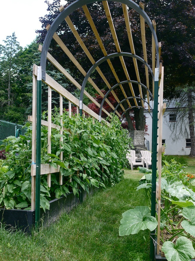 Grow 100 more food in half the space - How to build a grape vine support the natural roof ...
