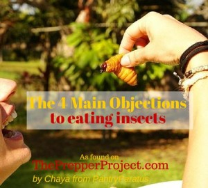 The 4 Main Objections to Eating Insects by Chaya