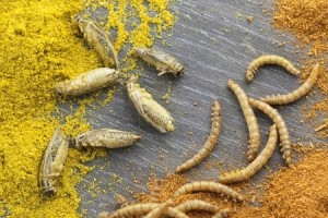 Crickets and mealworms with spices