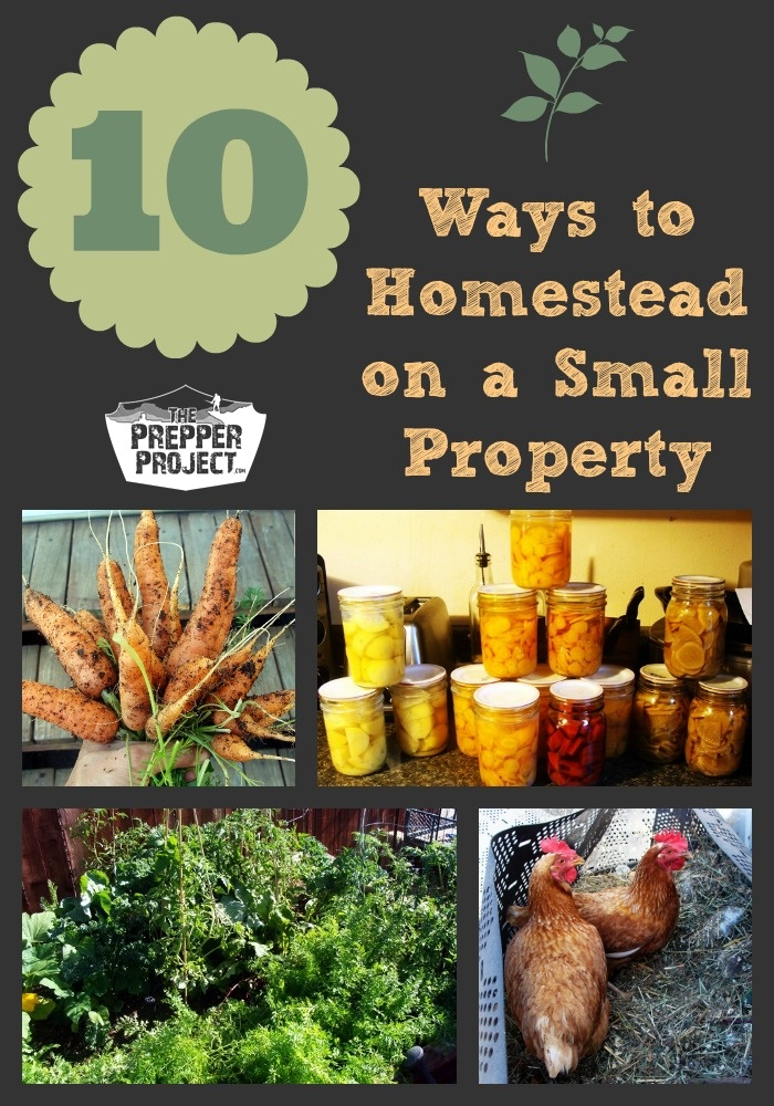10 Ways to Homestead on a Small Property - ThePrepperProject.com