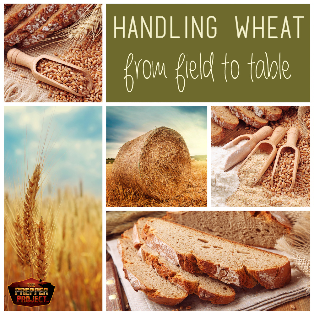 Handling Wheat: From Field To Table