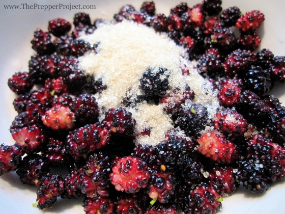 Mulberries with a little sugar make a sweet treat.