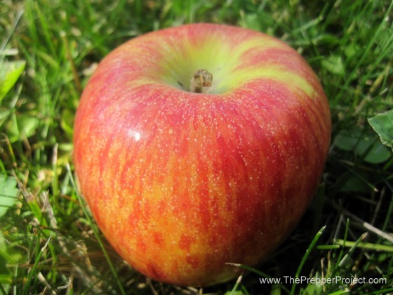 Grow varieties of apples that store well and you can eat fresh fruit all winter.