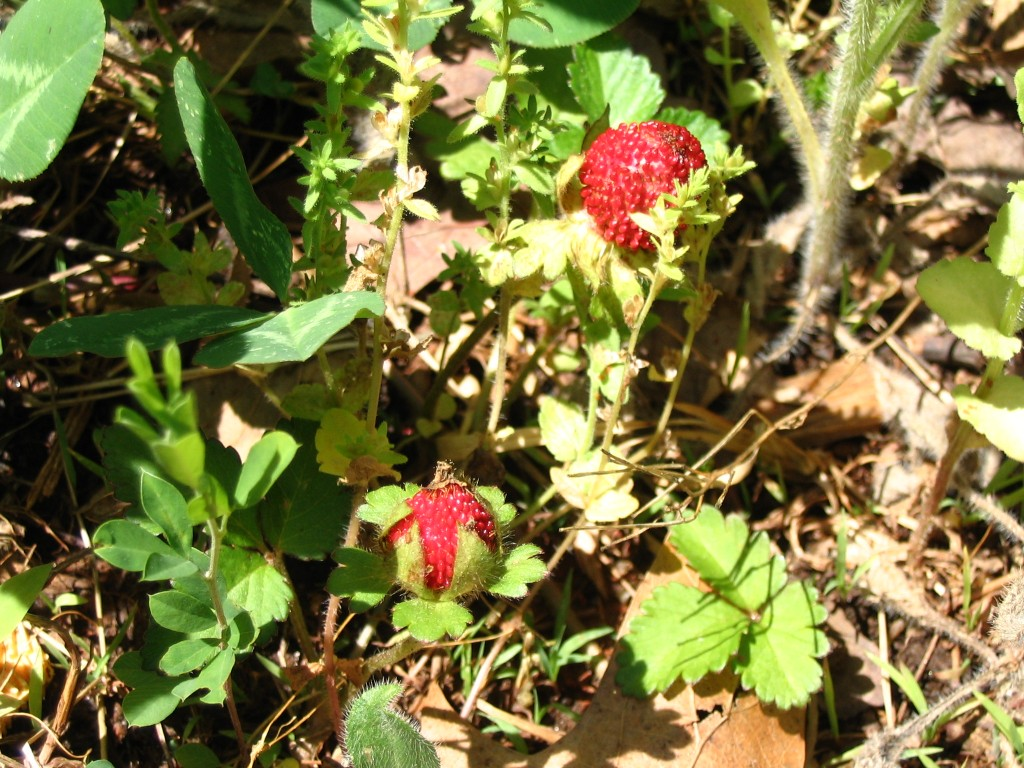 mock strawberries