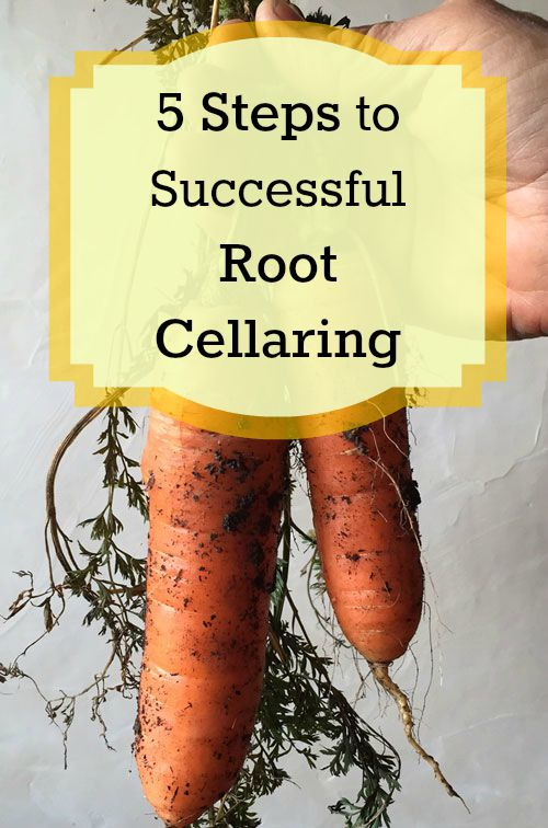 5 Simple Steps to start storing food with root cellaring