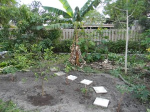 A tiny tropical backyard food forest.