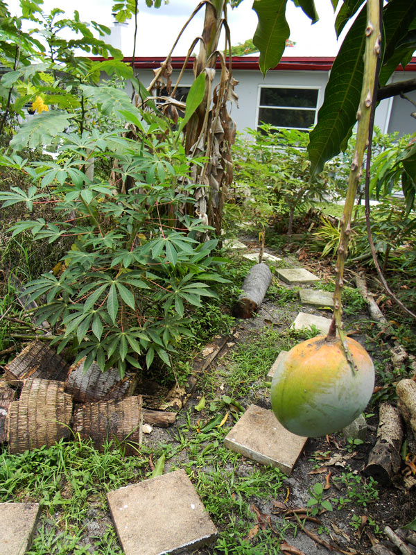 SouthFLFoodForest7-12(9)