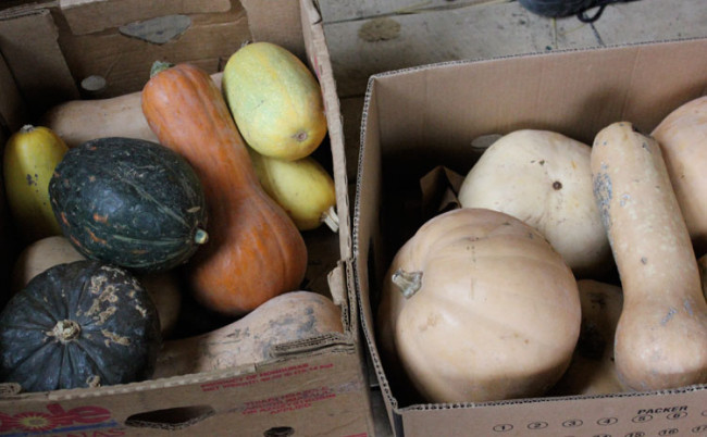 Winter squash does not need to be root cellare, but can be stored in a cool, dry area of your home
