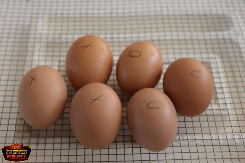 Mark eggs to keep track of manual rotation.